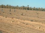 06To-the-desert06.jpg