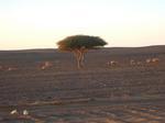 06To-the-desert14.jpg